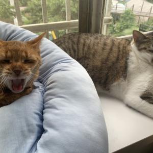 猫がもてなす農家民宿
