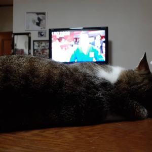 オリンピックと猫