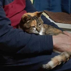 高齢猫 逝く