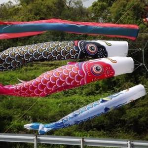 ☆鯉のぼり そして 藤の花