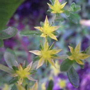 ☆散歩道より野に咲く花