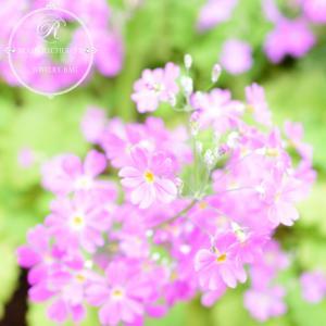 〆切とお庭のお花たち♡