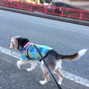 昨日の分のお散歩も。