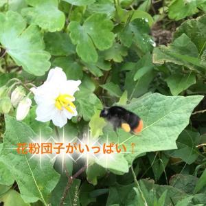 蜂が生きやすい地球へと思いを込めて