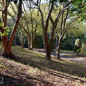 斜光の林・倒木のある風景