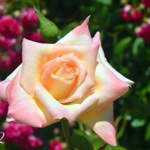 またバラを撮りに行ったときのスナップ