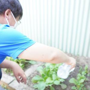 ワーク・わく中庭菜園日誌5