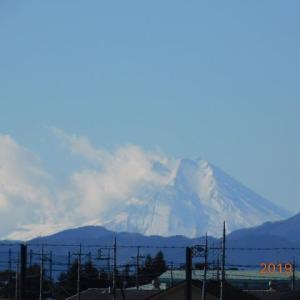 狭山丘陵の茶畑に浮かぶ富士