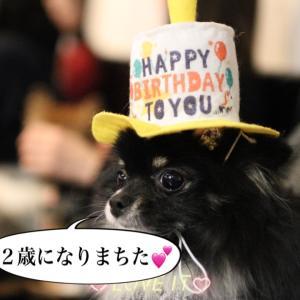 キャミちゃん2歳のお誕生会❗( ^o^)ノ