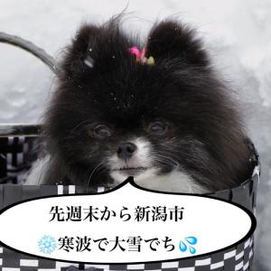 ⛄︎雪上ドッグラン❗( ^o^)ノ