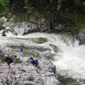 今日の鮎滝・新滝ピンコ_2020-06-14