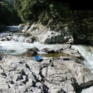 今日の鮎滝&ピンコ_2020-08-12