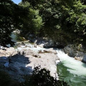 今日の鮎滝&ピンコ_2020-08-16