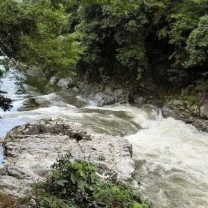 今日の鮎滝&ピンコ