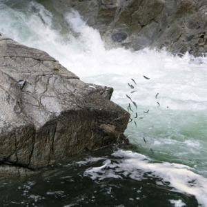 今日の鮎滝_2021-07-12