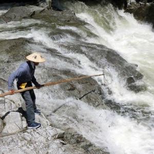今日の鮎滝・新滝PINKO_2021-08-10