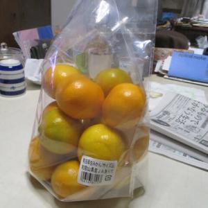常盤平団地の55年 1円玉