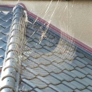 蜘蛛の巣に引っかかった話!