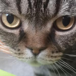 猫のつむじ
