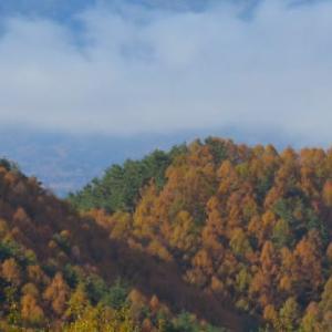 落葉松の黄葉と「 ANNIVERSARY」
