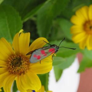 蛾の模様を楽しむ