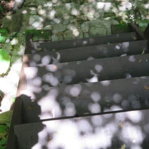 梅雨明けの庭