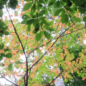 秋にシフト中