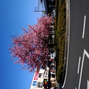 一足早く春が