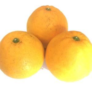お待たせいたしました!人気No1柑橘入荷です。