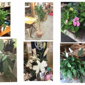 店内は観葉植物でデコしてます。