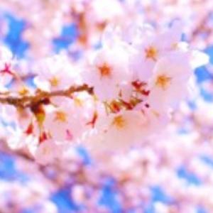 4/6 本日の結果&オーバーナイトセクション