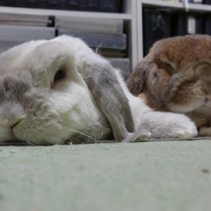 ウサギさんの「あるある」