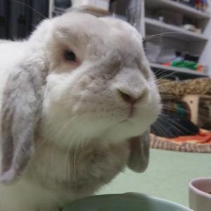 このは、美味しそうにペレット食べてるけど、それモカのペレットだよ~。モカ、このはがモカ...
