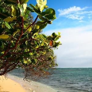 海の日・ハワイの海
