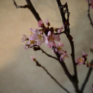 桜の季節のおもてなし