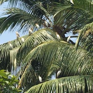美しいスリランカの姿