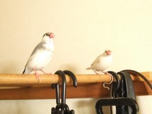 3日ぶりの放鳥
