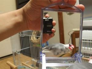 アキちゃんも鏡に興味をもったようです
