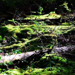 台風一過の森の光景