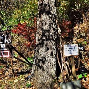 西桂町三つ峠 とうざんの里「秋」
