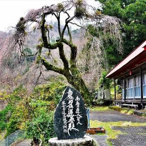学定寺の枝垂れ桜