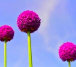 自宅に咲く草花達 2020梅雨②