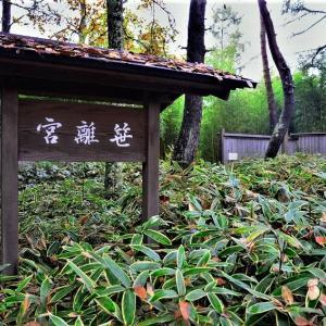 笹離宮 蓼科笹類植物園