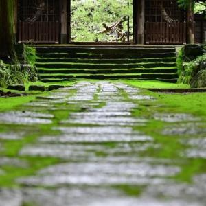 苔の美しい「慈雲寺」