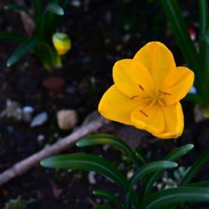 自宅に咲く草花達 秋分