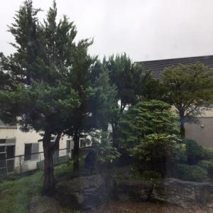 ショボ降る雨