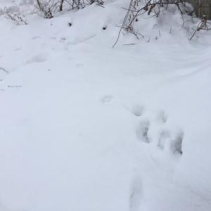 雪でした〜!