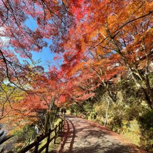 岩谷堂の紅葉