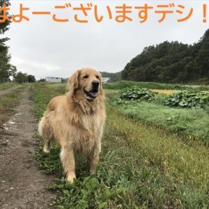 ワンワンゴルゴル、、番外編デシ!?(^∇^)