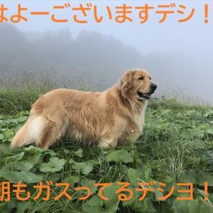 多分、今年最後かな!?デシ(^-^)/
